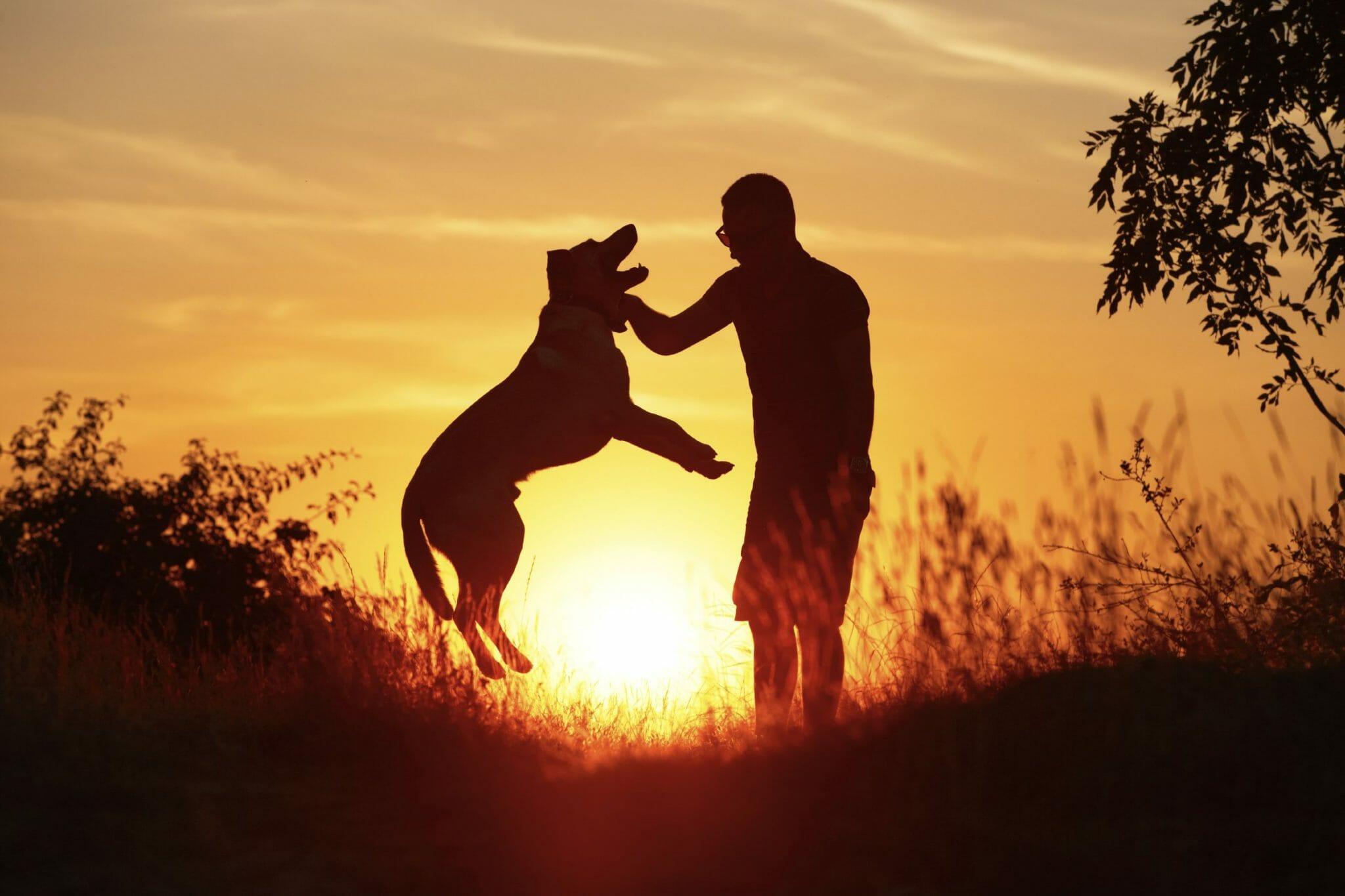 5 commoventi storie di grande amicizia tra uomini e animali