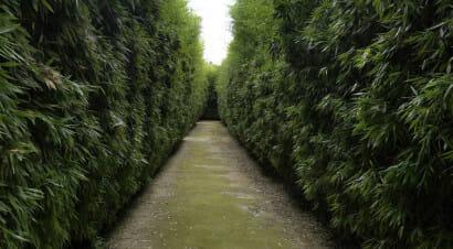 Apre in Italia il labirinto più grande al mondo (ispirato a Borges). Con migliaia di libri