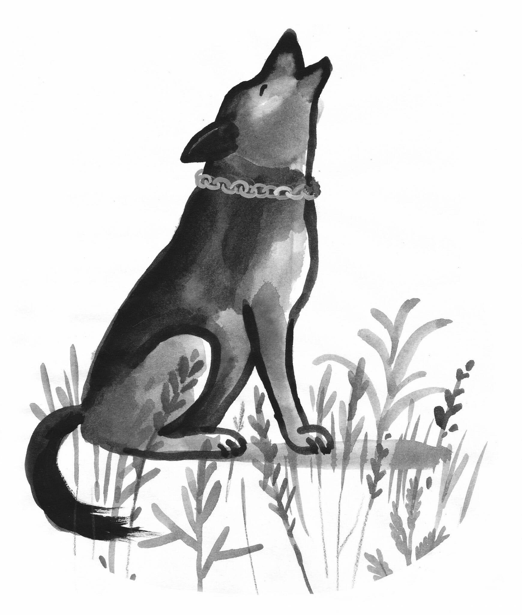 Imparare La Fedeltà Da Un Cane La Nuova Favola Di Sepúlveda