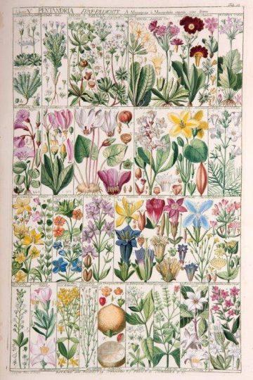 biblioteca botanica