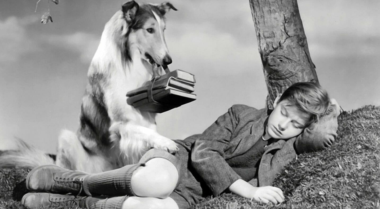 I cani celebri grazie al cinema, alla letteratura e alla tv