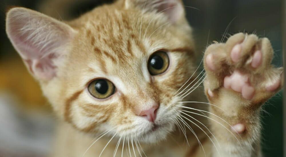 """""""I gatti la parola ce l'hanno eccome. Sta scritta nel loro sguardo"""""""