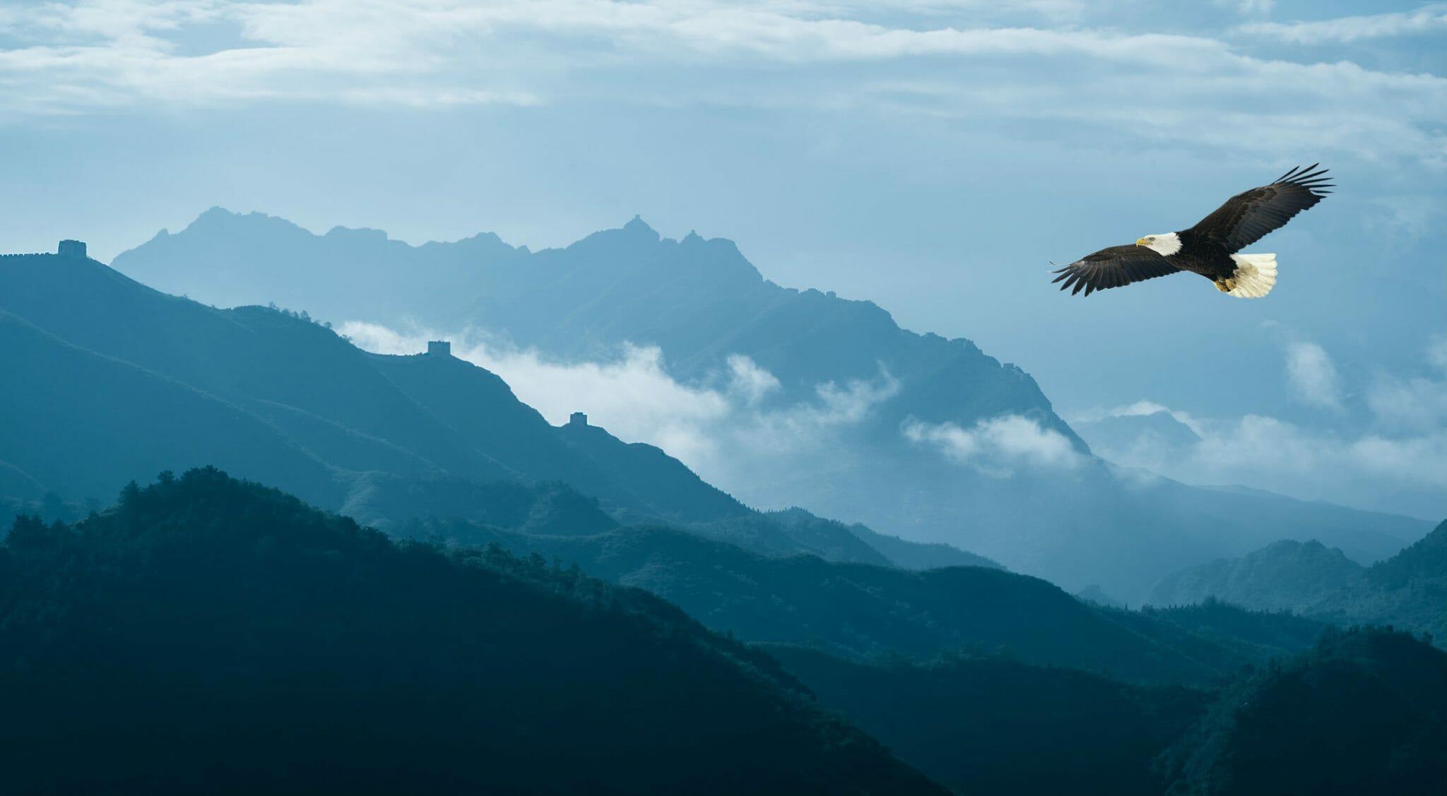 La straordinaria vita degli uccelli raccontata in un libro sorprendente