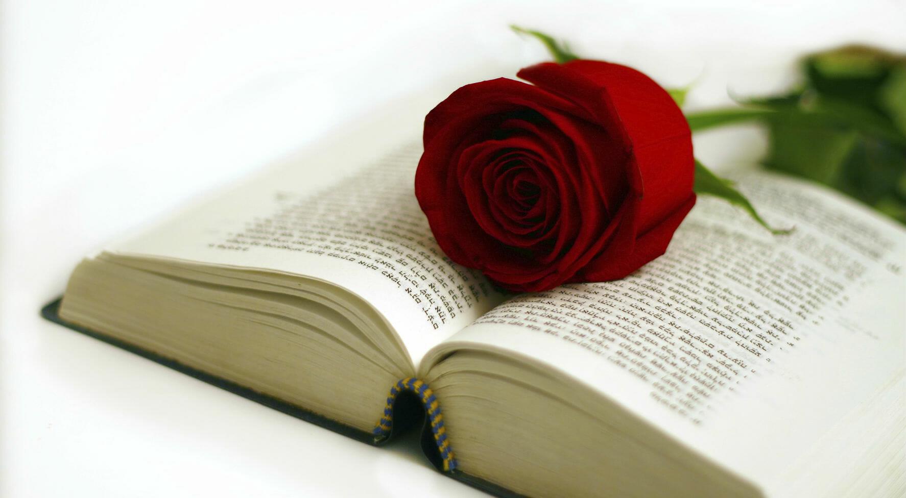 rose libri