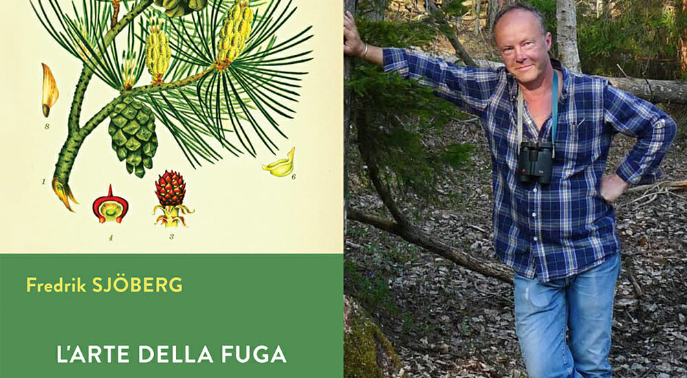 Sjöberg racconta l'America e la sua natura attraverso Gunnar Widforss, pittore vagabondo
