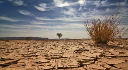 Climate Fiction: genere letterario a metà tra distopia, fantascienza e realismo