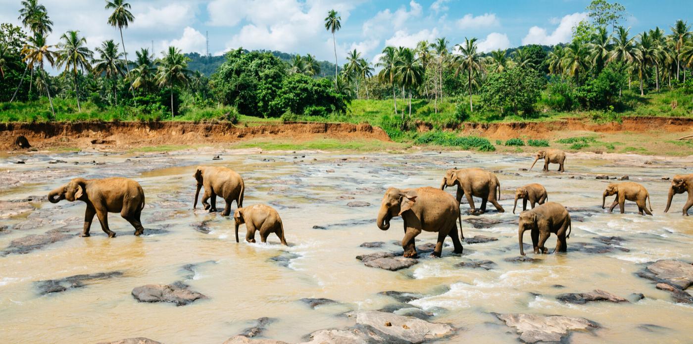 Sri Lanka: un viaggio letterario nei mille e più nomi dello splendore
