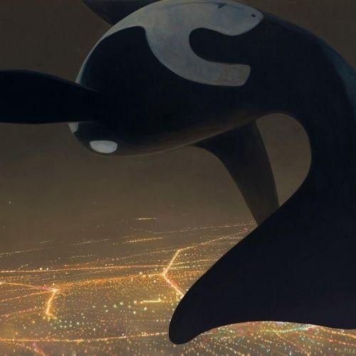 Piccole storie dal centro orca