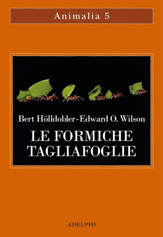 le formiche tagliafoglie di Holldobler e Wilson