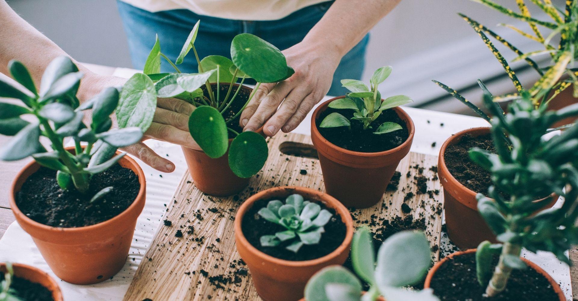 Libri su orti, piante e giardini (anche per chi ha poco spazio)