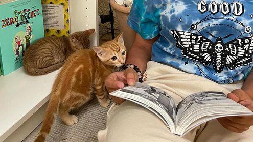 gatti libreria provenza
